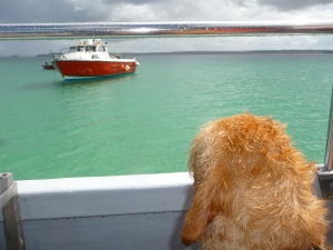 Zeus patiently waiting to set off out to sea